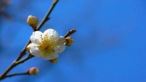 henkinen kukoistaminen